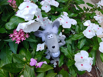 Martin the Mouse - Relax and Unwind Outside in Nature