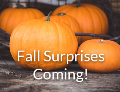 Happy Fall Everyone!